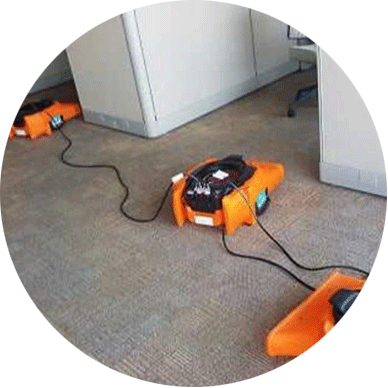 complete carpet care